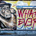 What Ever Chimp by Robin Zygelman