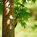Whats A Woodpecker To Do by Lori Tambakis