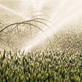 Wheat Crop Being Irrigated In Central Oregon by Bryan Mullennix