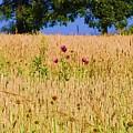 Wheat Field by Bill Cannon