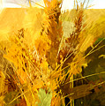 Wheat Field by Chris Butler