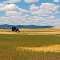Wheat Fields In The Palouse by Sharon Seaward