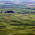 Wheat Fields Of The Palouse - Eastern Washington State by Daniel Hagerman
