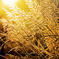 Wheat Freeze by Sam Davis Johnson