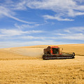 Wheat Harvest by Mike  Dawson