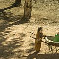 Wheelbarrow Girl  by Rob Hawkins
