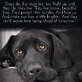 When Dogs Die by Kathy Tarochione