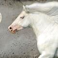 When Horses Dream by Fran J Scott