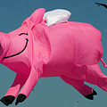 When Pigs Fly by Anthony Totah