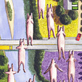 When Pigs Fly by Catherine G McElroy