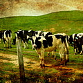 When The Cows Come Home . Photoart by Wingsdomain Art and Photography