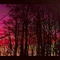 When The Deep Purple Falls by Ellen Cannon