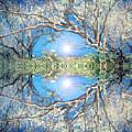When Trees Embrace by Tara Turner