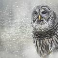 When Winter Calls Owl Art by Jai Johnson