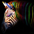 When Zebras Dream 7d8908 Square by Wingsdomain Art and Photography