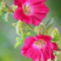 Where Flowers Bloom So Does Hope by Elizabeth Winter