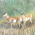 Where The Antelope Play by Vera Rodgers