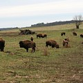 where the Buffalo Roam 3 by Lew Wescott