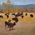 Where The Buffalo Roam by Tate Hamilton