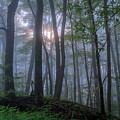 A Tender Light by Ron Jones