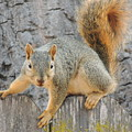Where's The Nuts? by Traci Hallstrom