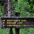 Which Way To Mayflower Lake by Dwight Eddington