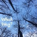 Which Way? by Victoria Bulostin