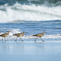 Whimbrels On Parade by Robert Potts