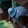 Whirly Bird by David Derr