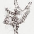 Yoga Cat by Judith Kunzle