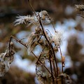 Whisp Of Winter by Desmond Raymond