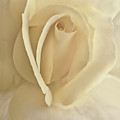 Whisper Of A Soft Yellow Rose Flower by Jennie Marie Schell