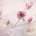 Whisper Of Spring by Annie Snel