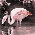 Whisper Pink Flamingo by Lisa Kilby