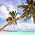 Whispering Palms. Maldives by Jenny Rainbow