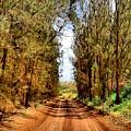 Whispering Pines by DJ Florek