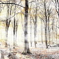 Whispering Woodland In Autumn Fall by Simon Bratt Photography LRPS