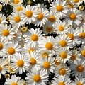 White An Yellow by Oudi Arroni