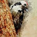 White And Black Woodpecker by Jaroslaw Blaminsky