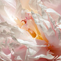 White And Pink Peony 3 by Rudi Prott