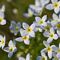 White And Yellow Blossoms by Edward Myers