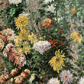 White And Yellow Chrysanthemums In The Garden At Petit Gennevilliers by Gustave Caillebotte