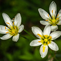 White And Yellow Wild Flowers by Ron Bennett
