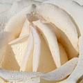 White Angel Rose by Mariola Bitner
