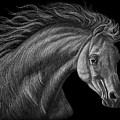 White Arabian  by Dale Crum