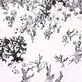 White As Snow by Rachel Christine Nowicki