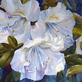 White Azaleas by Janet Zeh