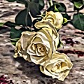 White Baby Roses by Marian Palucci-Lonzetta