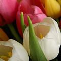White Balance In Spring by Karen Mesaros