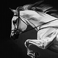 White Beautiful Horse B And W by Gull G